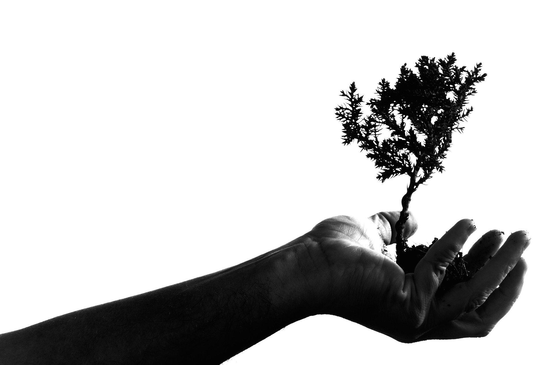 Dezvoltarea psihosexuală și apărările eului
